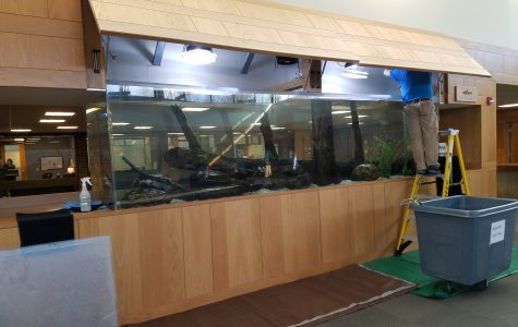 Examining the Depths of the Fish Tank